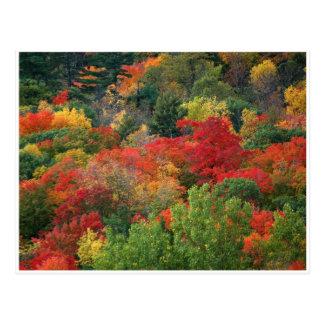 Colores de la caída postales