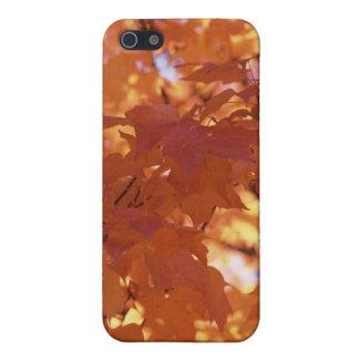 Colores de la caída - todo el naranja iPhone 5 protector