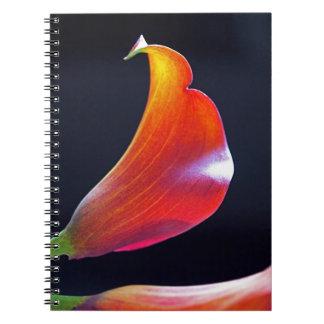 Colores de la cala y cuaderno de las curvas