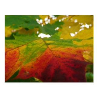 Colores de la postal de la hoja de arce