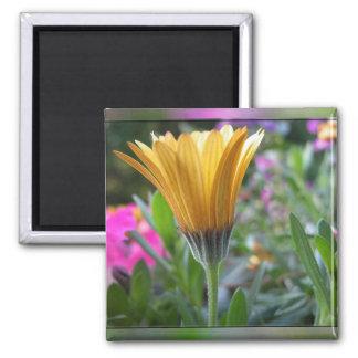 Colores de la primavera - modificada para requisit imanes de nevera