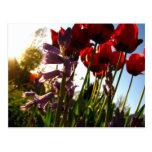Colores de la primavera postal