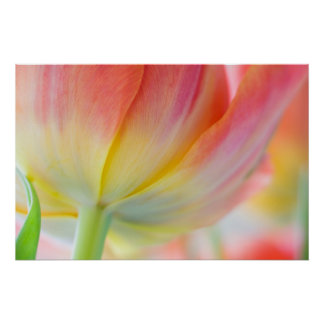 Colores de la primavera poster