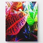 Colores de las hojas placa de plastico