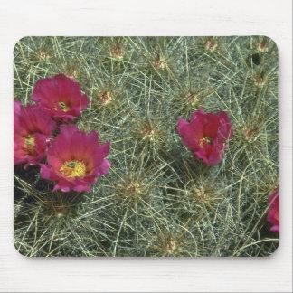 Colores de los cactus alfombrillas de raton
