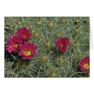 Colores de los cactus tarjetón