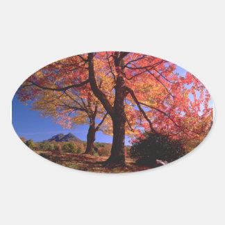 Colores del árbol del otoño pegatina ovalada