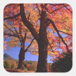 Colores del árbol del otoño