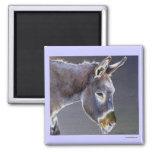 Colores del burro ligero imanes