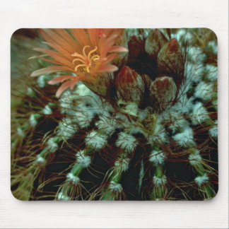 Colores del cactus alfombrillas de raton