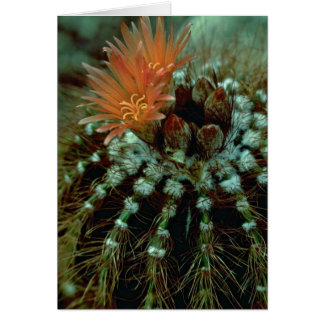 Colores del cactus tarjeta