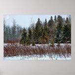 Colores del invierno posters