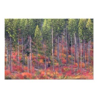 Colores del otoño de bosques en la cascada 3 fotografía