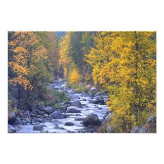 Colores del otoño de bosques en la cascada 4 cojinete