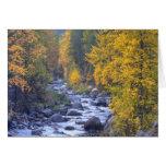 Colores del otoño de bosques en la cascada 6 tarjeton