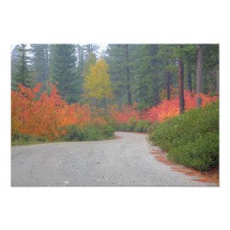Colores del otoño de bosques en la cascada 7 cojinete