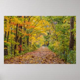 Colores del otoño en el parque de estado de la póster