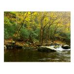 Colores del otoño en Great Smoky Mountains Tarjetas Postales