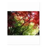 Colores del otoño postales