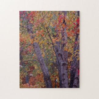 Colores del otoño puzzles con fotos