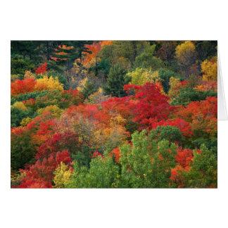 Colores del otoño tarjetas