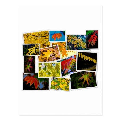 colores del otoño tarjetas postales