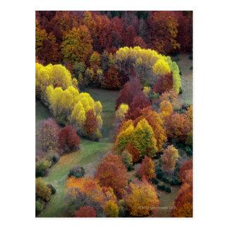 Colores del otoño tarjeta postal