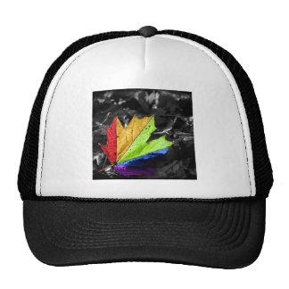 Colores frescos abstractos de la hoja de arce gorras
