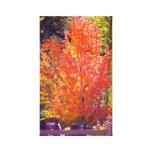Colores hermosos 2 de la caída impresión en lona estirada