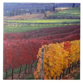 Colores rojos y amarillos intensos de la caída en  azulejo cuadrado grande