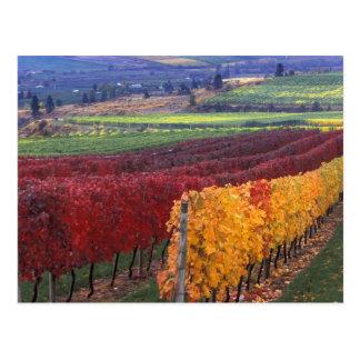 Colores rojos y amarillos intensos de la caída en postales
