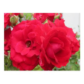 Colorete color de rosa Fleur Tarjeta Postal