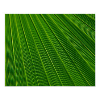 Colorful abstract green palm leaf poster