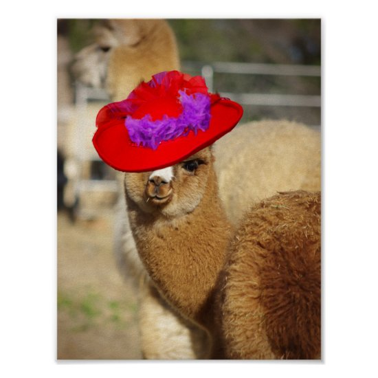 Colorful Alpaca Poster