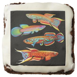 Colorful Aquarium Killifish Gourmet Brownies Square Brownie