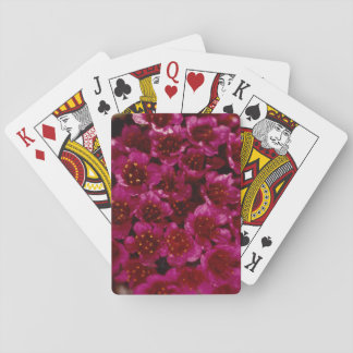 Colorful Arctic Purple Saxifrage Wildflower Design Poker Cards