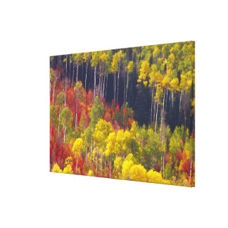 Colorful aspens in Logan Canyon Utah in the 2 Gallery Wrap Canvas