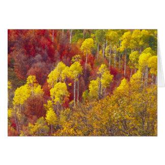 Colorful aspens in Logan Canyon Utah in the 2 Greeting Card