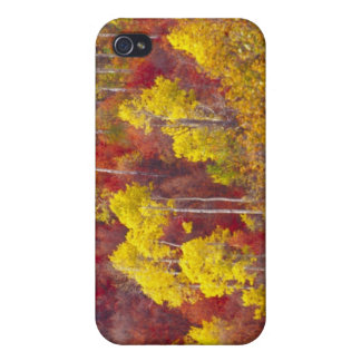 Colorful aspens in Logan Canyon Utah in the 2 iPhone 4/4S Covers
