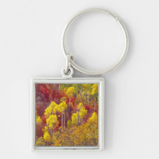 Colorful aspens in Logan Canyon Utah in the 2 Keychain
