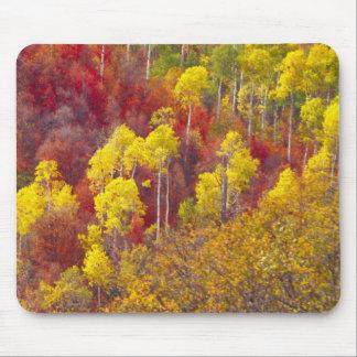 Colorful aspens in Logan Canyon Utah in the 2 Mousepads