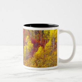 Colorful aspens in Logan Canyon Utah in the 2 Coffee Mug