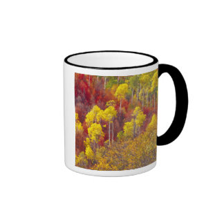 Colorful aspens in Logan Canyon Utah in the 2 Mugs