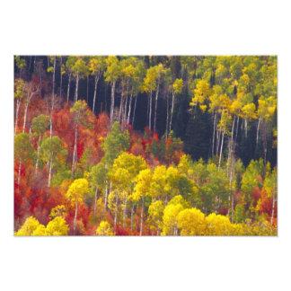 Colorful aspens in Logan Canyon Utah in the 2 Photo Print