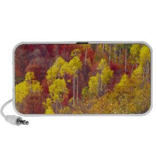 Colorful aspens in Logan Canyon Utah in the 2 iPhone Speaker