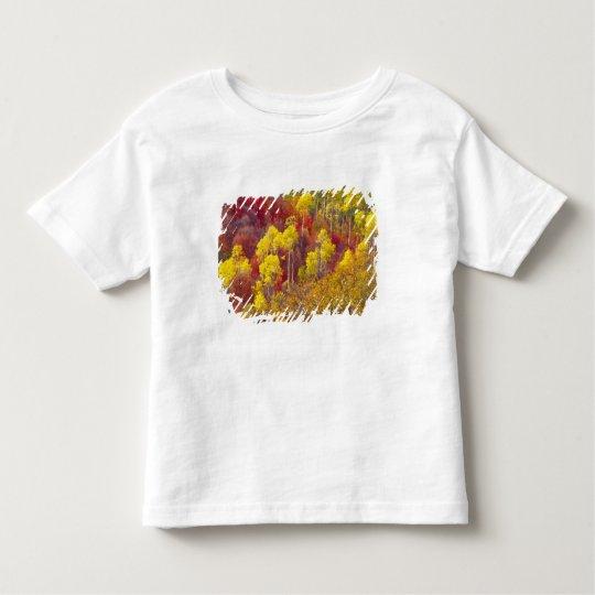 Colorful aspens in Logan Canyon Utah in the 2 Toddler T-shirt