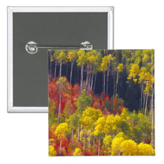 Colorful aspens in Logan Canyon Utah in the Pin