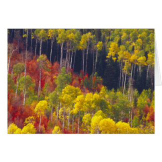 Colorful aspens in Logan Canyon Utah in the Cards