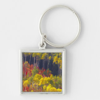 Colorful aspens in Logan Canyon Utah in the Key Chains