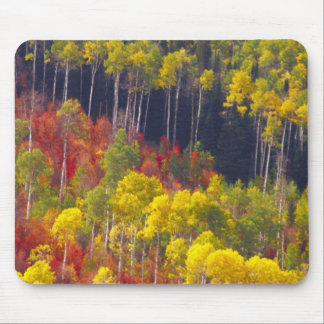 Colorful aspens in Logan Canyon Utah in the Mouse Pads